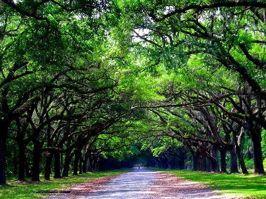 Wormsloe in Savannah, Georgia photo DSCN00630012.jpg