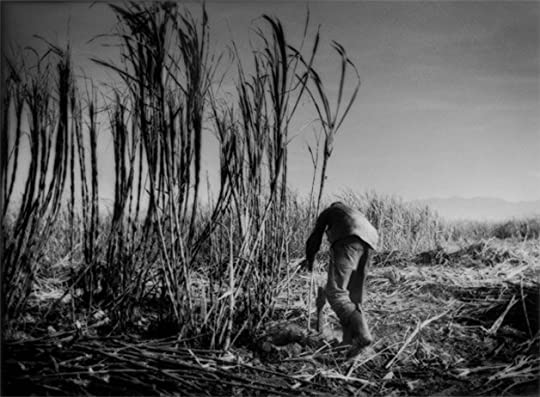 farming of bones The farming of bones is the story of haitian orphan amabelle desir, a young girl living and working in the dominican republic amabelle falls in love with another.