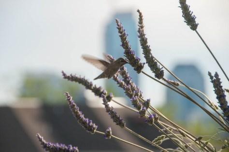 Image of Balcony garden with hummingbird