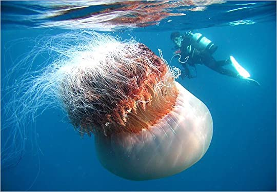 Spineless The Science Of Jellyfish And Art Growing A