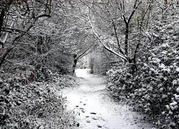 Winter Theme photo for Xmas News and Blog 2017.jpg