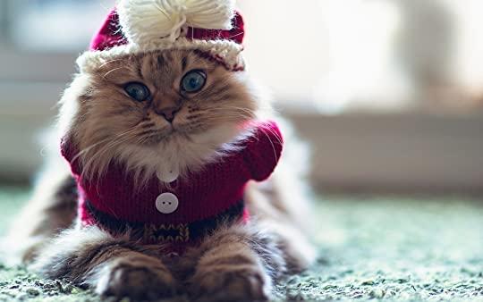 photo Christmas 7.jpg