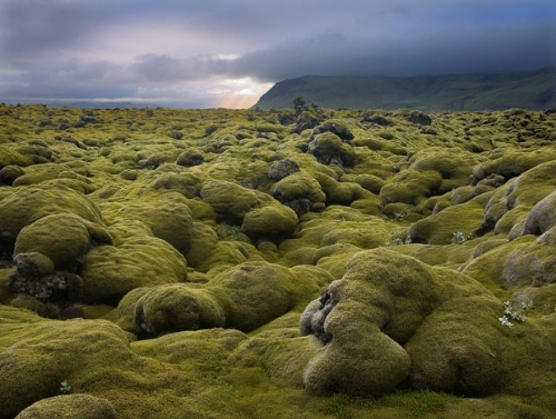 photo iceland20moss20lava20field1_zps3wpfnzut.jpg