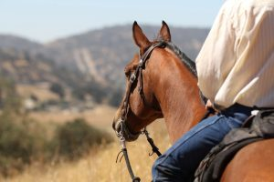 Horse and rider looking at the mountains