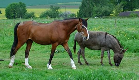 donkey and horse best friends