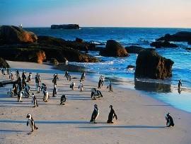 Penguins_Sm