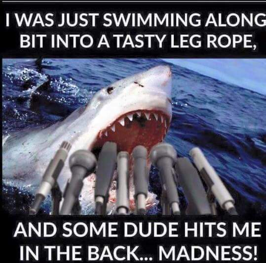 www_shark_0