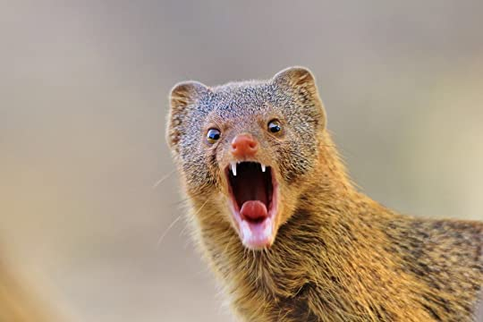photo 3 mongoose-teeth-1280x853-_zps5uhwatvp.jpg