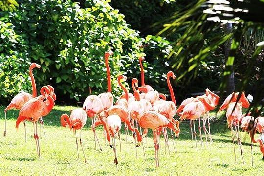 misbehaving flamingos