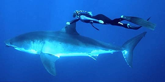 www_shark_swim
