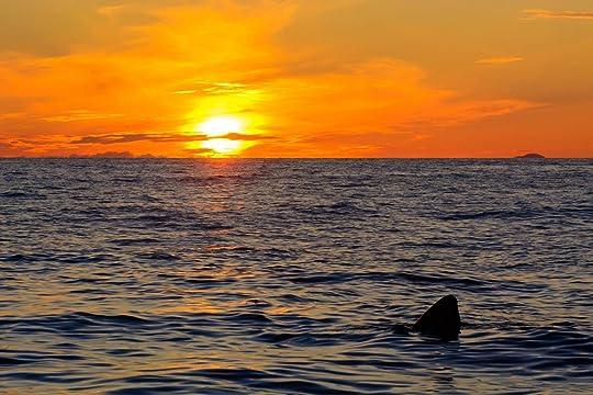 great_white_shark_sunset