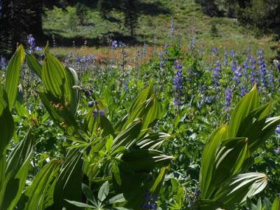 alpine spring, flowering plants, awakening plants, spiritual awakening, spiritual nature