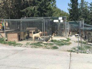 Kyrenia Animal Rescue Centre, North Cyprus