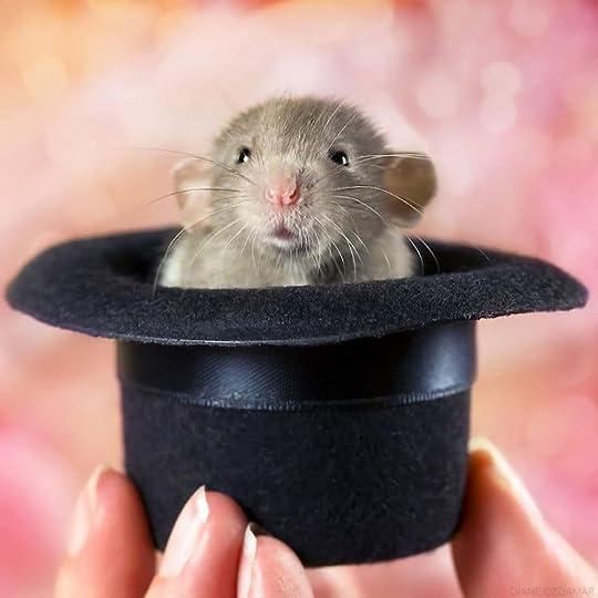 Bildergebnis für cute rat