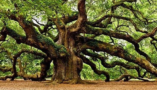 Risultati immagini per l'uomo che piantava gli alberi