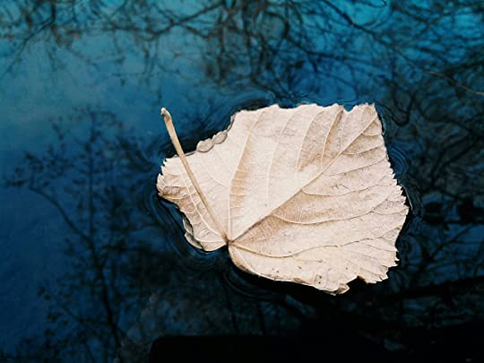 sunday inspirational poetry leaves