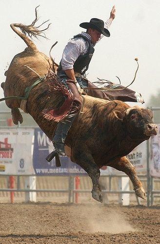 Rodeo bull rider