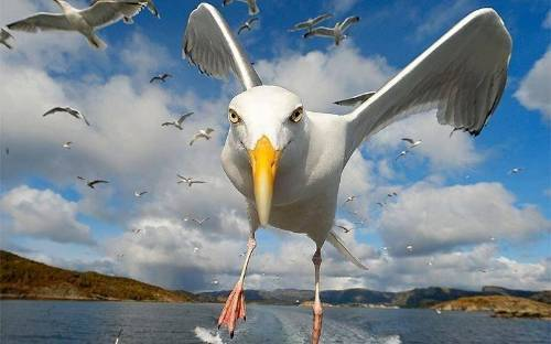 photo Seagulls_zpsilip9iwp.jpg