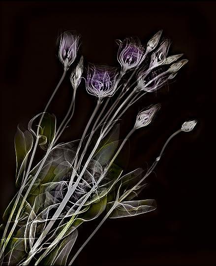 photographing flowers davis harold