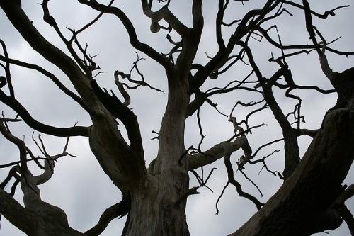 photo Tree_zps59f63c89.jpg