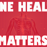 osteoporosis in men statistics
