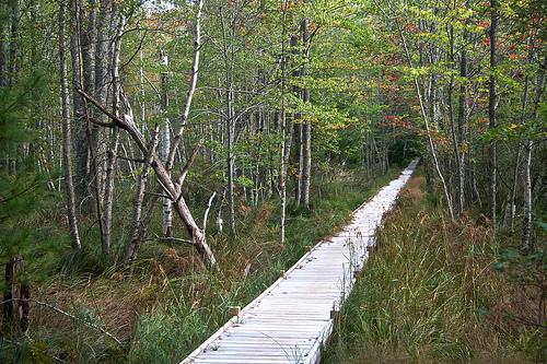 The Wild Gardens of Acadia 488