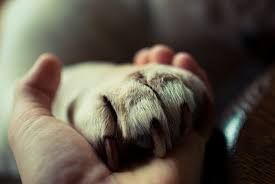 holding a dogs hand
