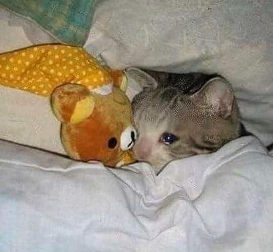 Crying cat meme - Album on Imgur