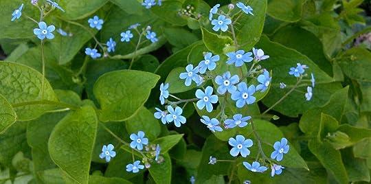 ces petites fleur bleues
