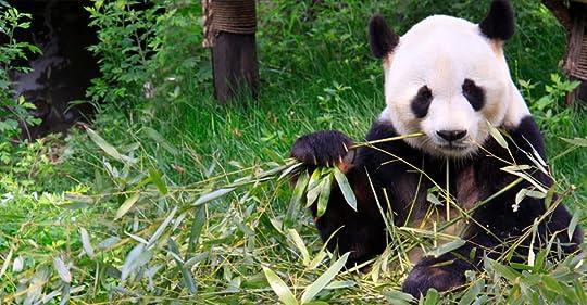 photo panda pic 2.jpg