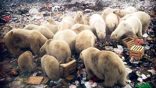Image result for polar bears in siberia