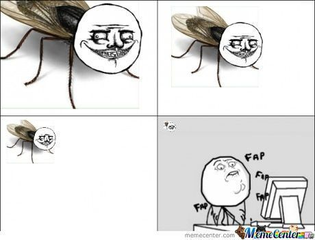 Image result for fly on the wall meme