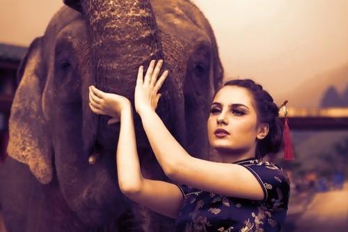 Similarities between elephants and humans