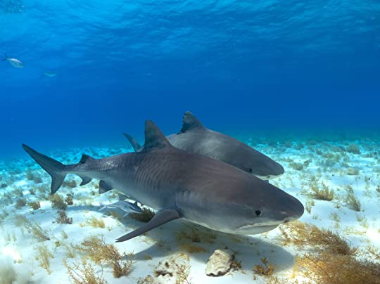 Emperors of the Deep: Sharks--The Ocean's Most Mysterious