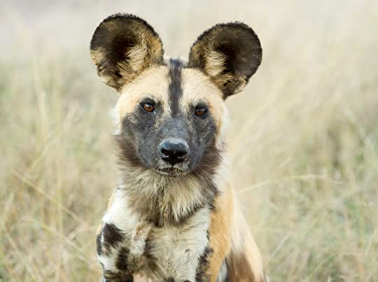 Image result for wild dog