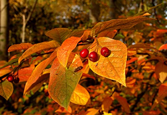 Stay safe and healthy in the autumn | SCAS Kids