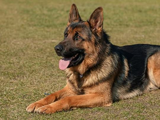 An overview of working dogs