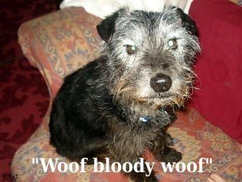 woof bloody woof