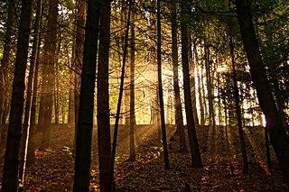 Autumn Forest by Stiller Beobachter