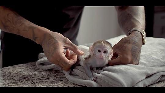 chaging-monkey