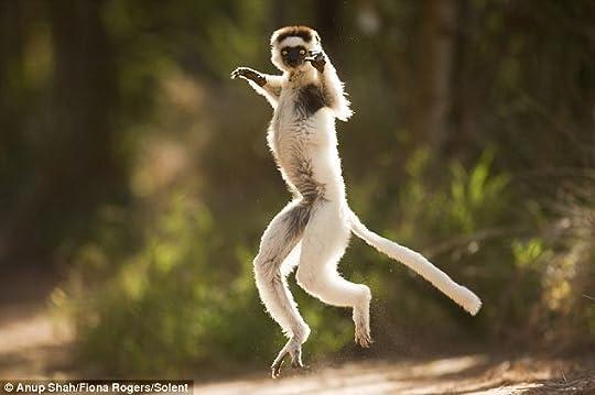 graceful-monkey