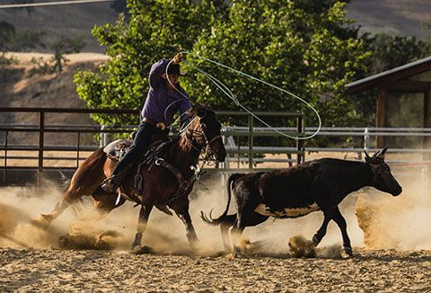cowboy roping cow in rodeo - Google Search