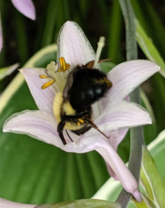 2020-01-04-GCarroll-bee-crop.jpg