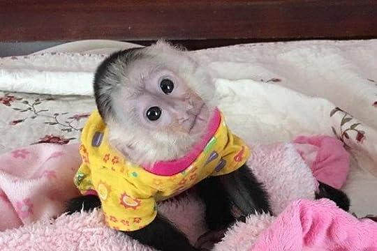 pet monkey - Google Search