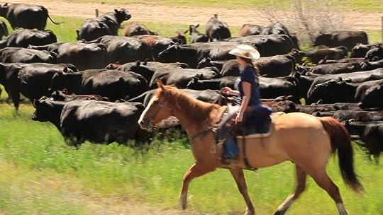Image result for herding cattle on horseback