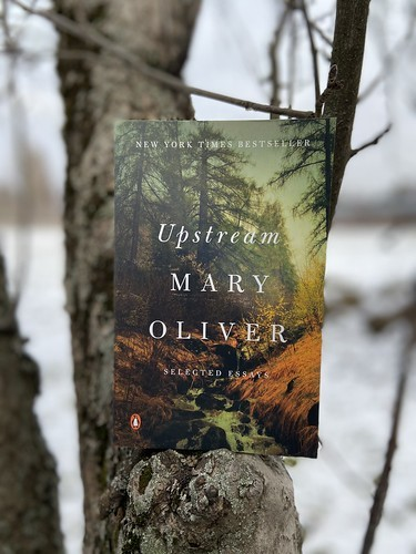 Upstream book by poet M. Oliver