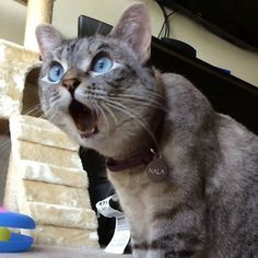 50 Best Shocked Cat images | Funny cats, Crazy cats, Funny animals