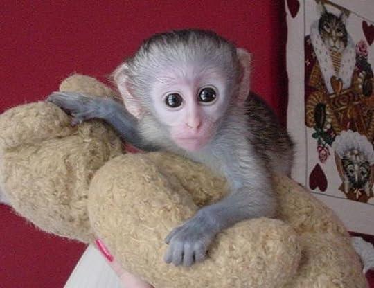 cute pet monkey - Google Search
