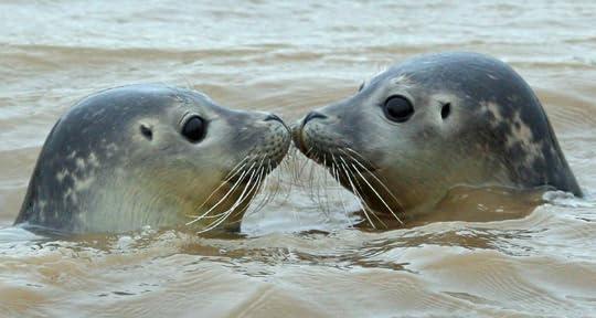 Baby Seals – tHiNk TwIcE