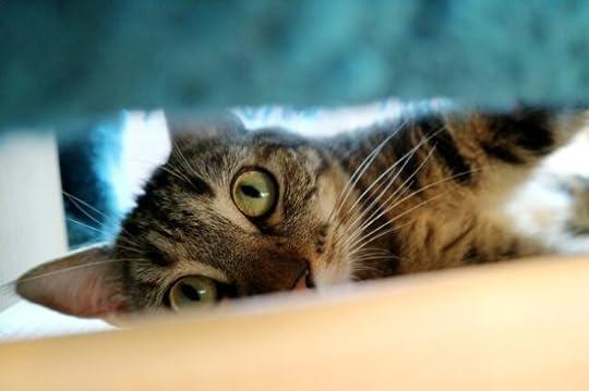 cat-hiding-thunderstorm